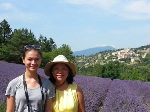 Lavenders fields
